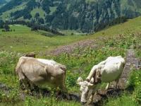 AX2009-Bodensee-Gardasee-04-Schiers-037
