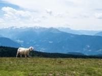 AX2016-Innsbruck-Gardasee-05-St_Apollonia-0031