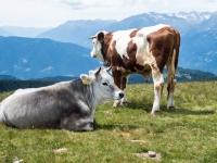 AX2016-Innsbruck-Gardasee-05-St_Apollonia-0037