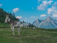 AX2018-Mayrhofen-Gardasee-06-Spera-0067
