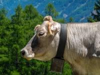 AX2021-Garmisch-Gardasee-03-Sattelberg-070